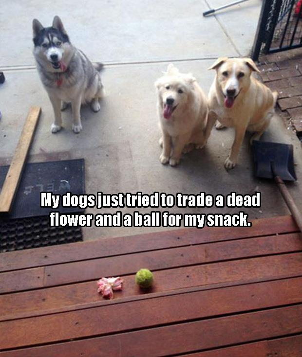 the dogs want my snacks