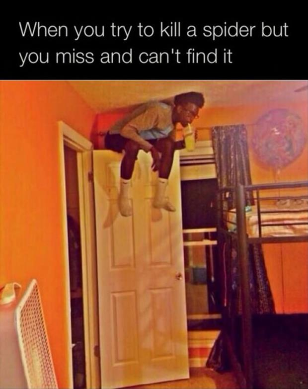 trying to kill a spider