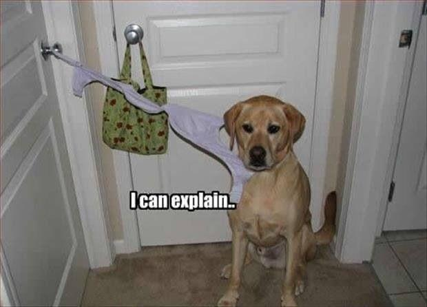 Pets Are Always Guilty Until Proven Innocent Pics - 23 hilarious photos of pets caught red handed