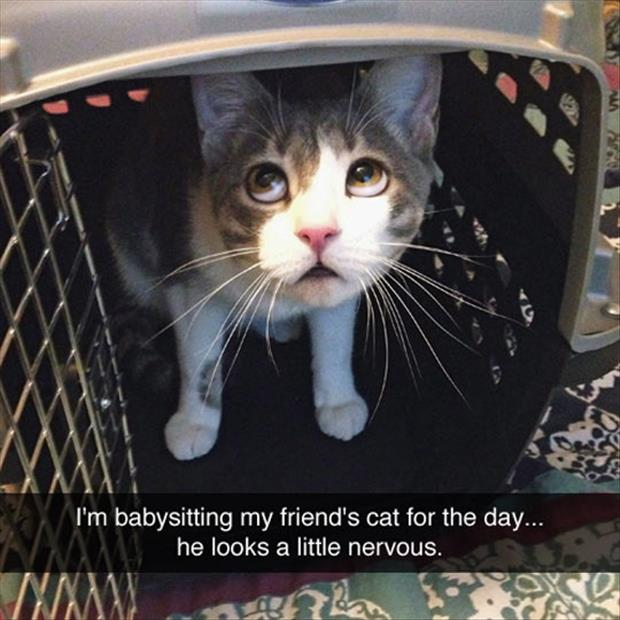 cat looks nervous