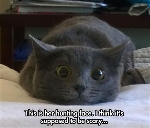 cats hunting face