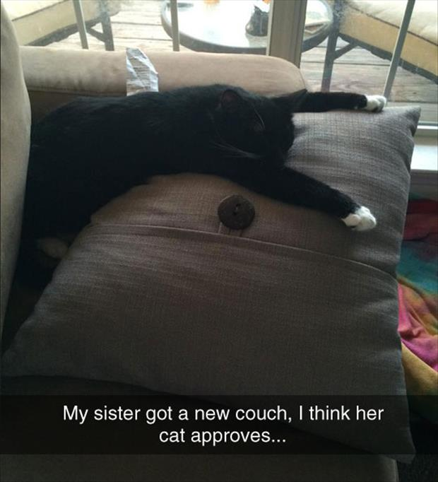 couch is cat approved
