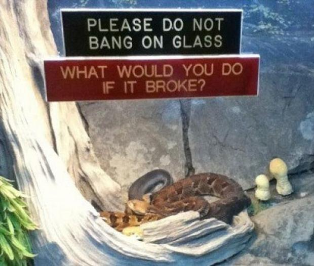 do not bang on glass