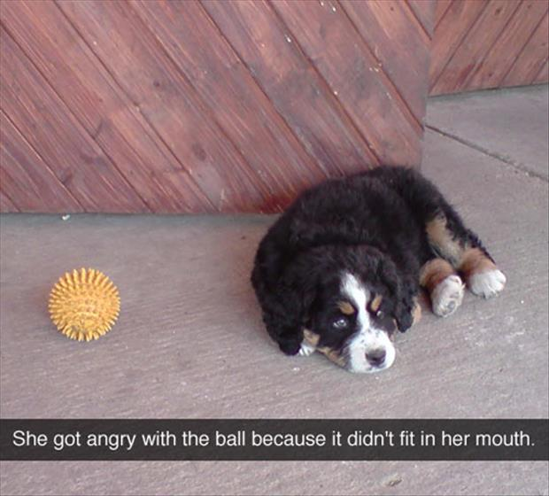 dog hates his ball