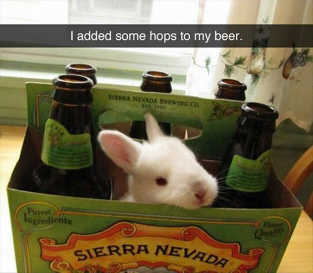hops in the beer