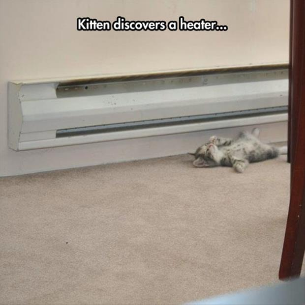 kitten finds heater
