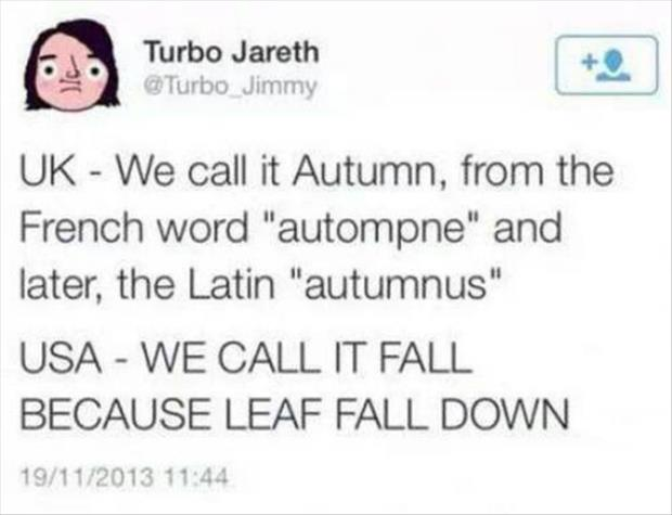 leaf fall down