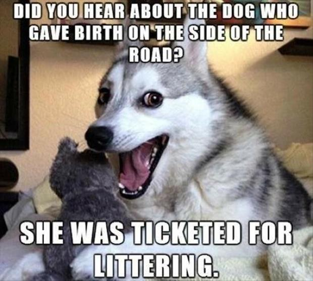 one liner dog jokes