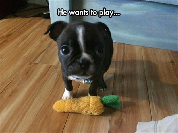 puppy wants to play