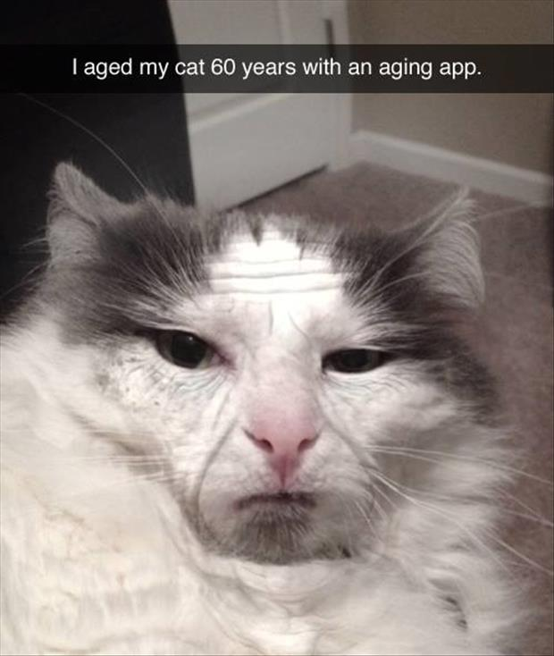 the aging app on the cat