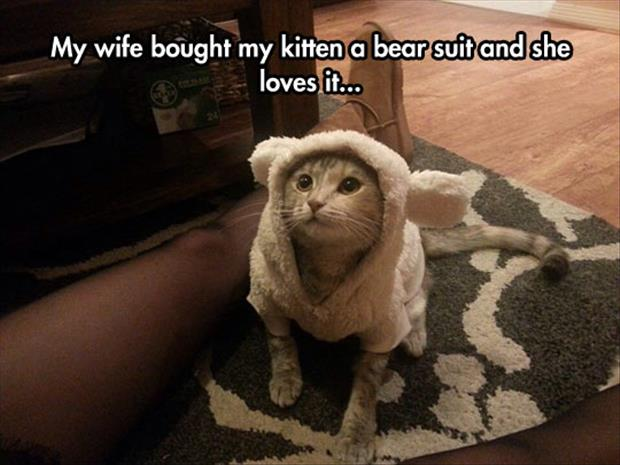the cat loves the bear suit