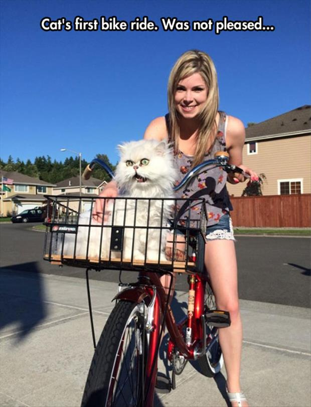 the cat's first bike ride