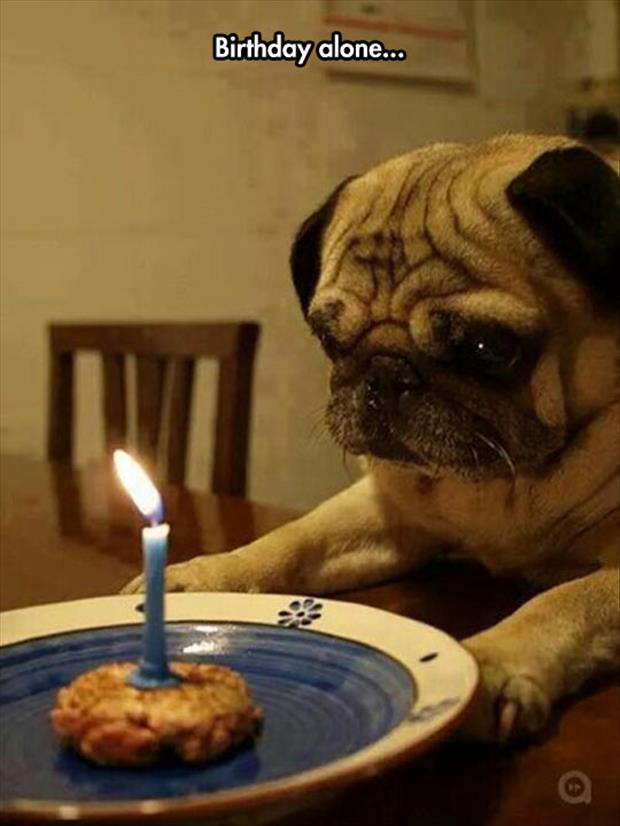 the dog has birthday alone