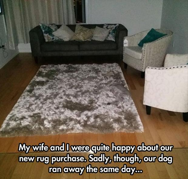 the dog is on the rug