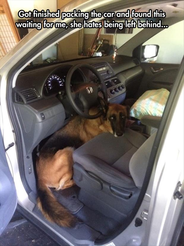 the dog loves going for a ride