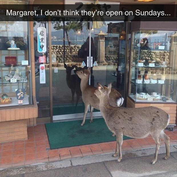 they're not open on Sundays