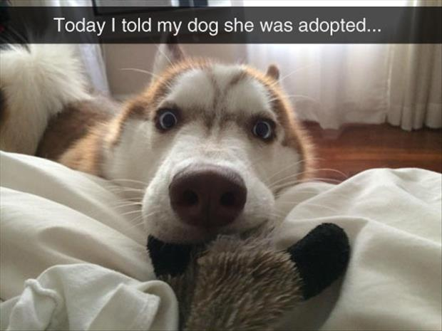 told my dog he was adopted
