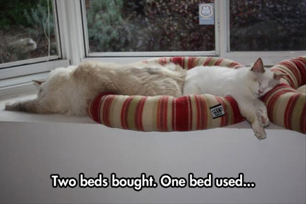 two cat beds