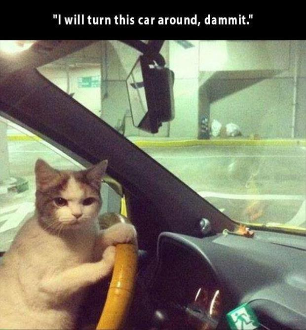 z funny pictures (34)