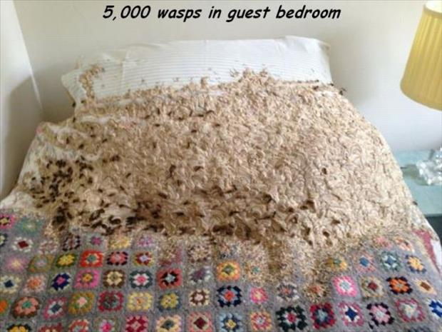 a wasp in the guest room
