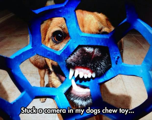 camera in a dog's chew toy