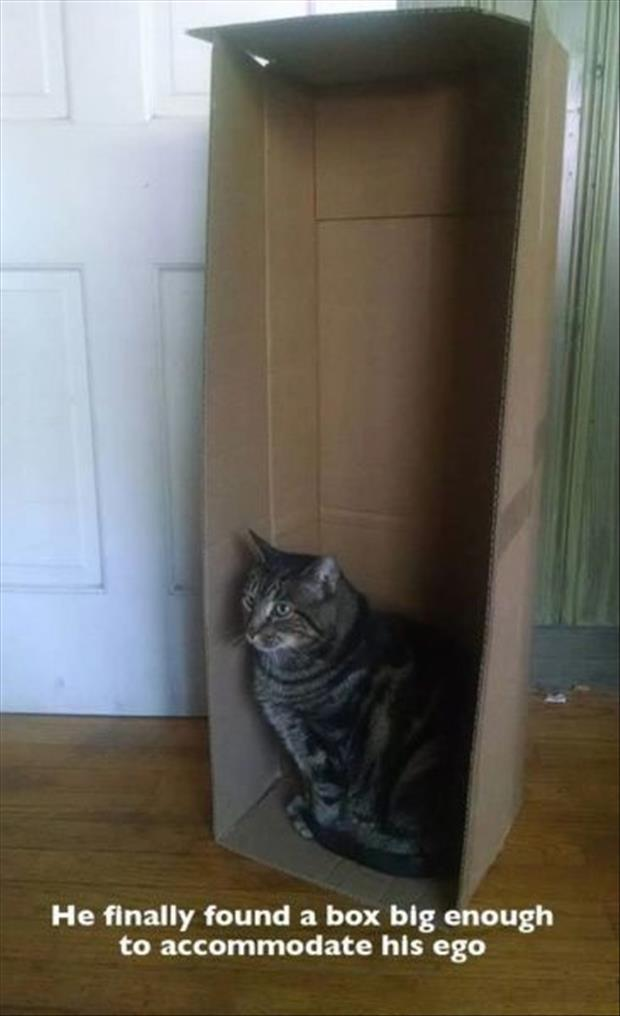 cat in a box and his ego
