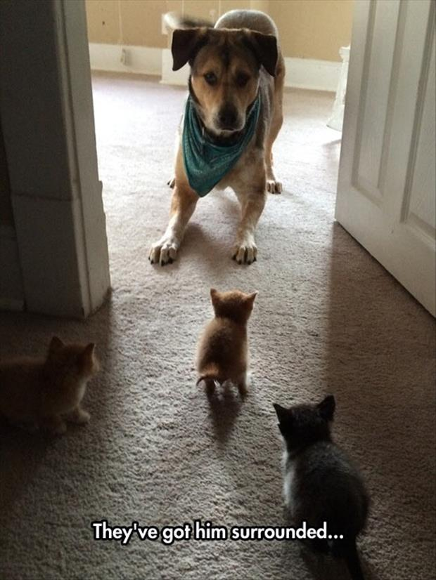 cats surround the dog