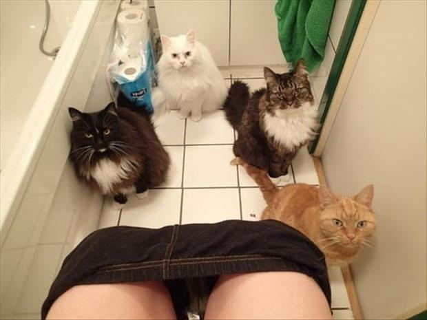 cats watch me poop
