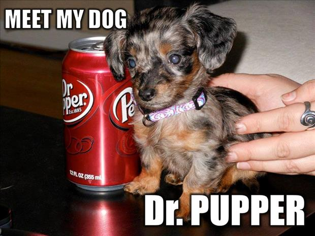 doctor puppy
