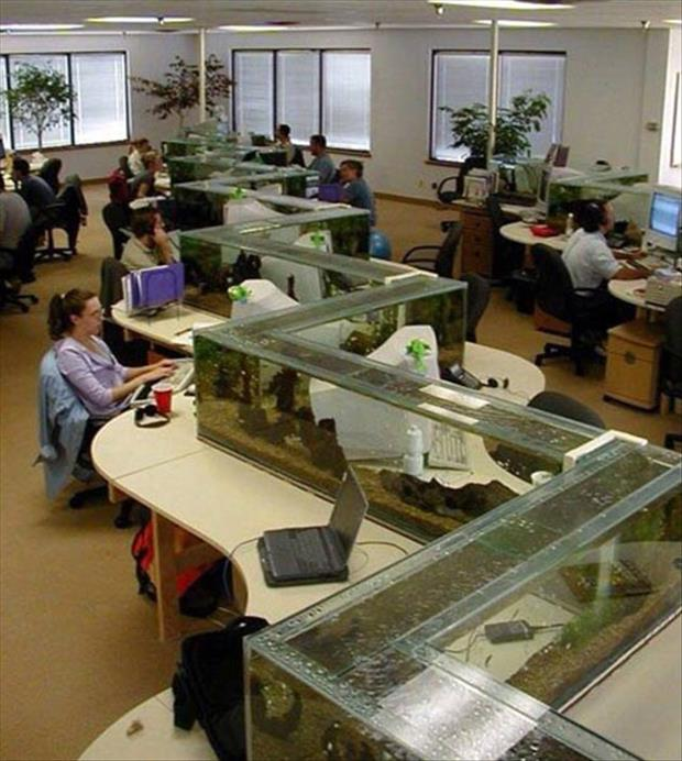 fish tank in the office