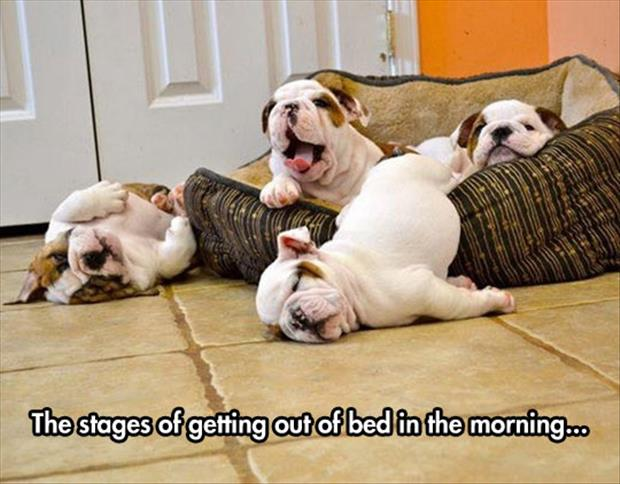 getting out of bed in the morning