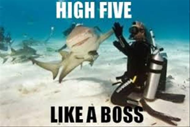 it's friday high five everything (8)