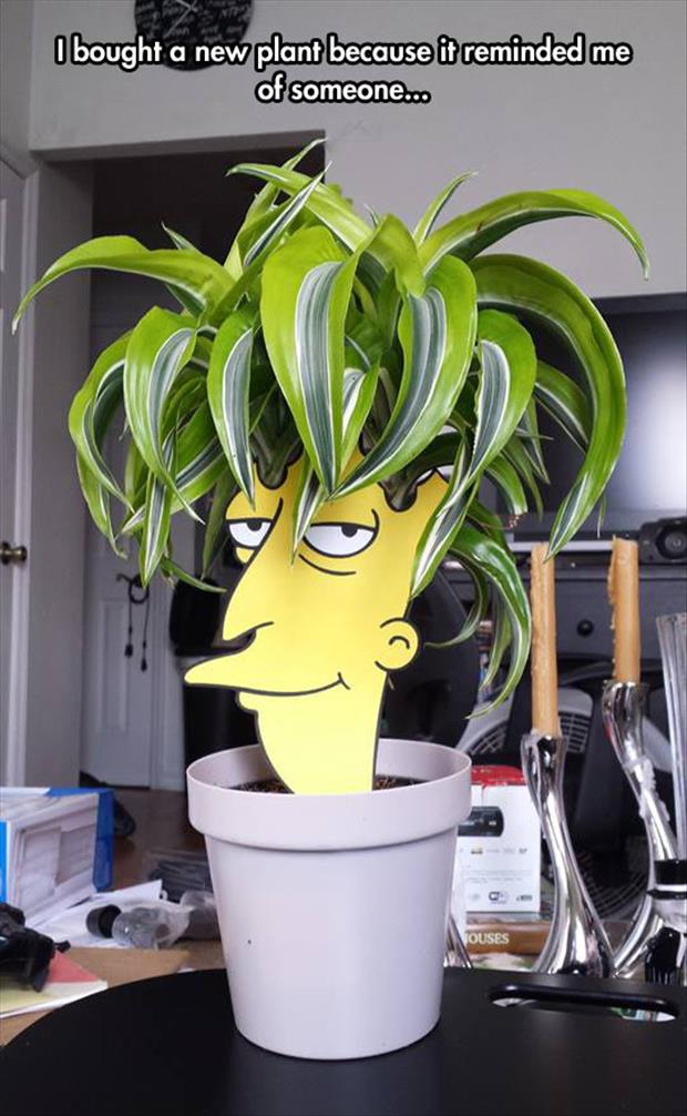 just bought a new plant