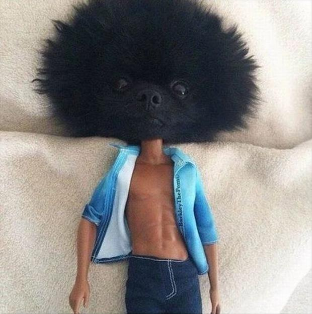 ken doll with dog head