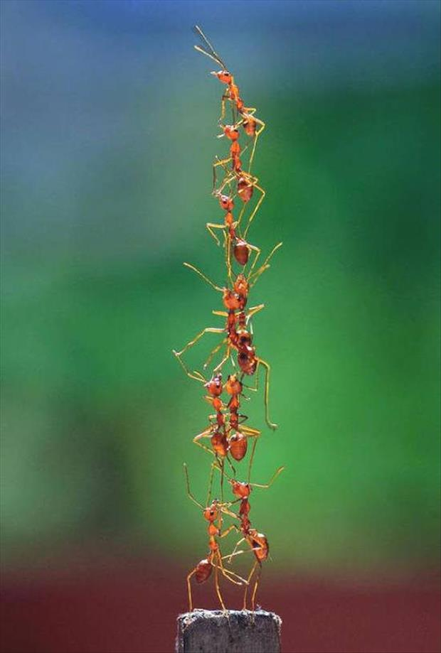large ant pile