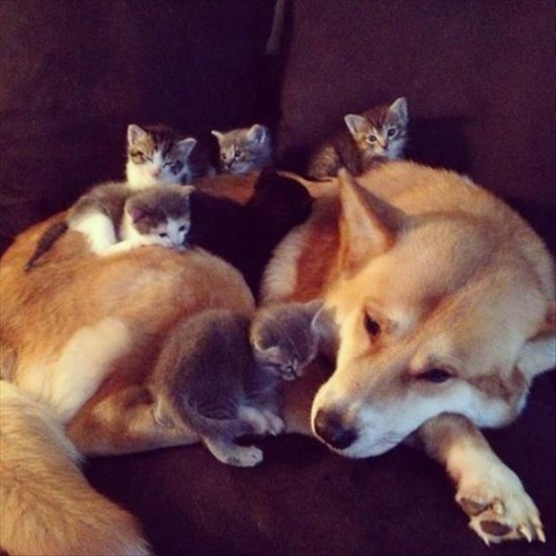 large dog and kittens