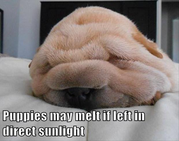 melting puppies