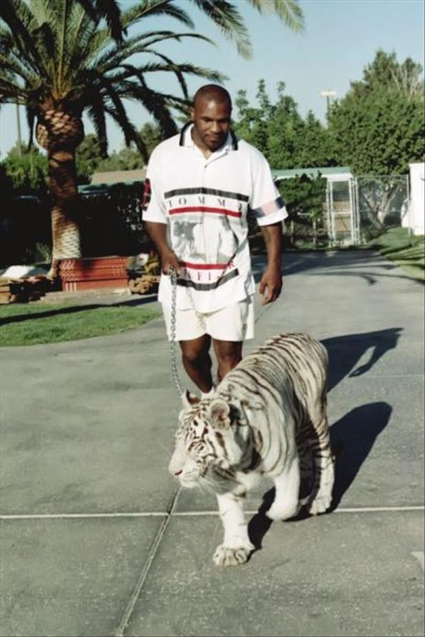 mike tyson's tiger