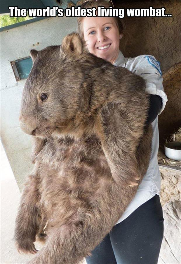 oldest living wombat