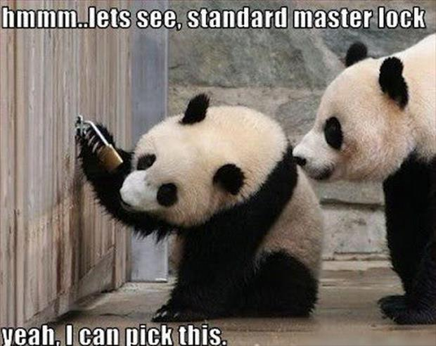 panda picks a lock