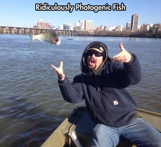 photogenic fish
