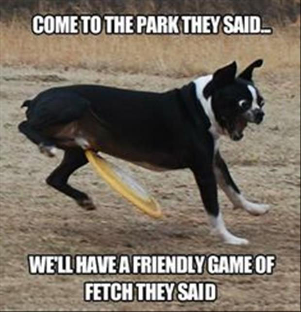 playing catch with your dog