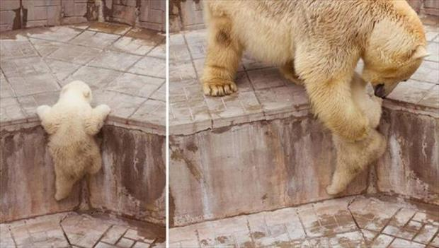 polar bear cub needs some help