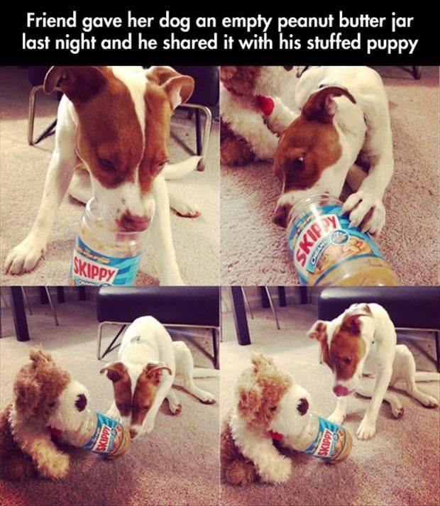 puppy shared his snacks