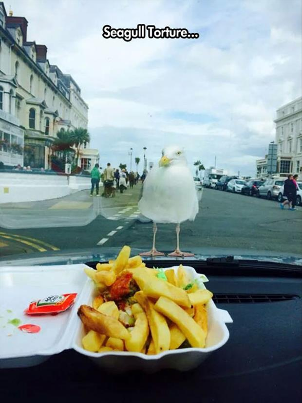 seagull torture