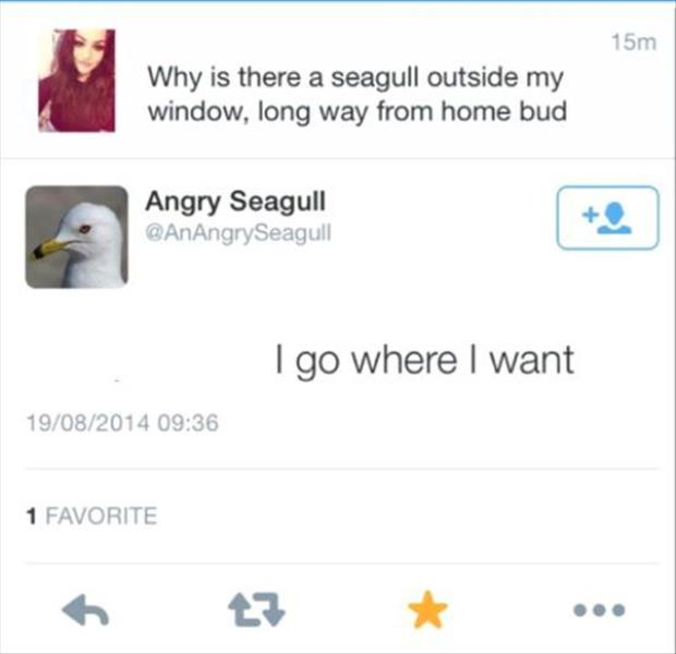 the angry seagul