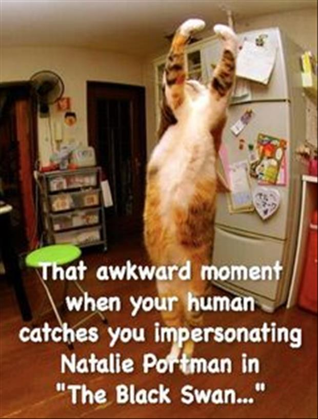 the awkward moment for cats