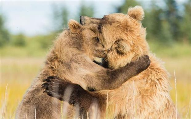 the bear hugs
