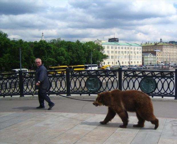 the bear in russia