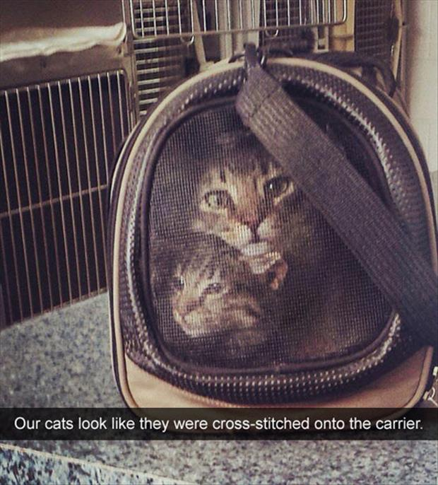 the cat carrier